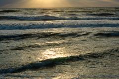 Sea Rays